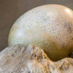 ¿Cuánto vale un huevo de dinosaurio real?