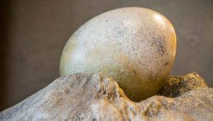 cuanto cuesta un huevo de dinosaurio
