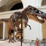 7 hechos sorprendentes sobre el dinosaurio Sue - el fósil más completo del T-Rex