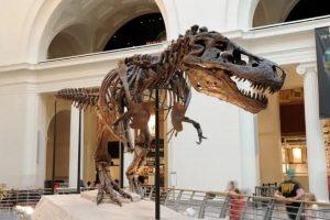 dinosaurio sue
