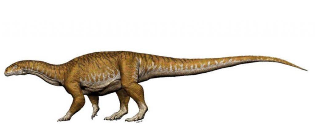 dinosaurio cola larga