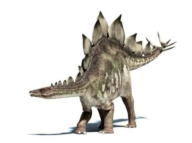 El-dinosaurio acorazado - Estegosaurio
