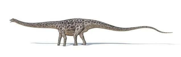 Diplodocus-había-un-terrorificante-navegador-cola