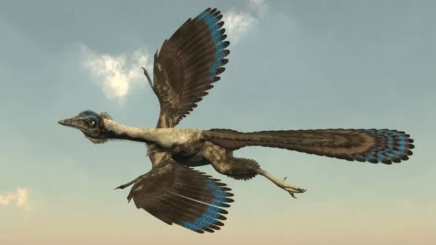 Archeopterix-uno-de-las-primeras-pájaros