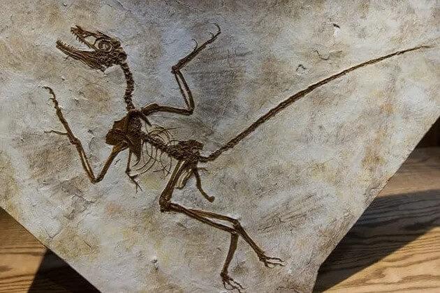 reptiles voladores y fósiles