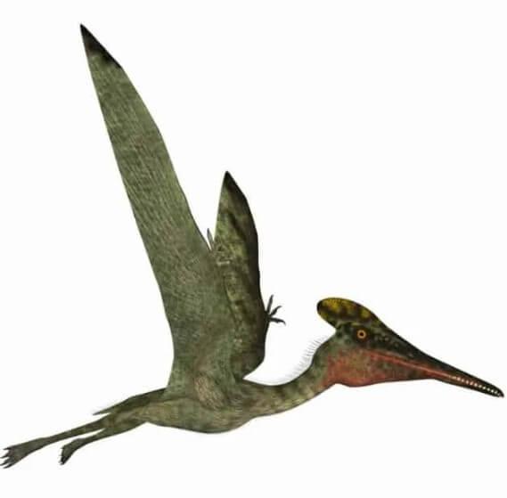 Pterodactylus-fue-un-pterosaurio