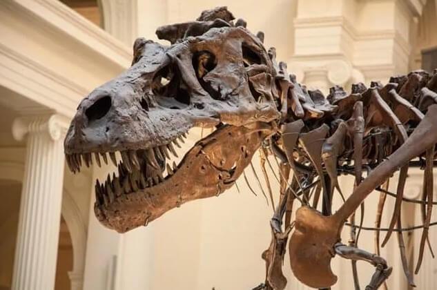 t-rex-esqueleto