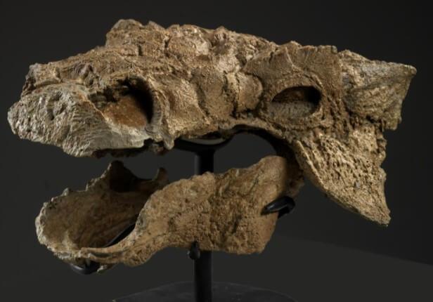fosilizacion dinosaurio