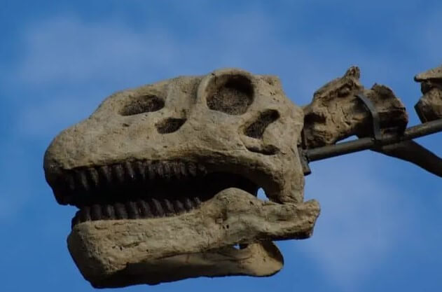 Los saurópodos eran herbívoros y aventureros dinosaurios