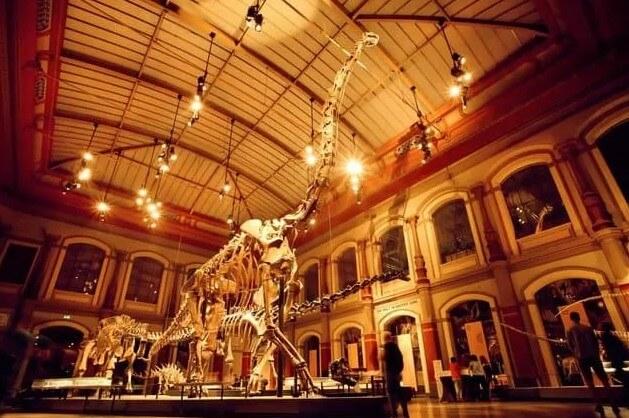 esqueleto de saurópodos-esqueletos-fósiles