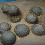 Aprende cómo se fosilizan e identifican los huevos de dinosaurio
