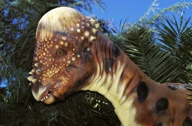 Los Paquicefalosaurios de cabeza puntiaguda - cómo se protegieron los dinosaurios