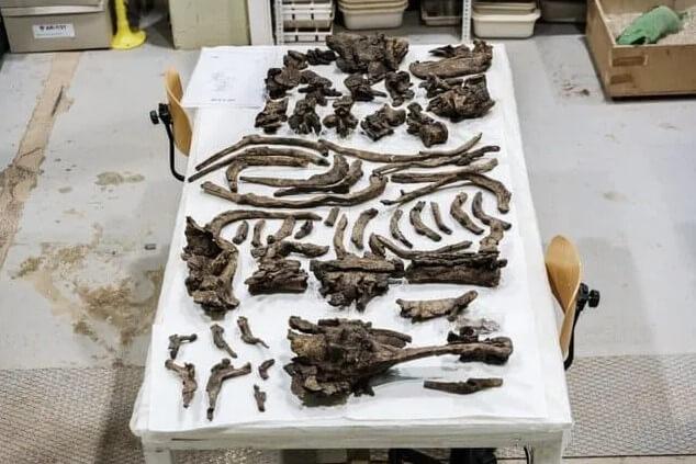 fósiles en el laboratorio