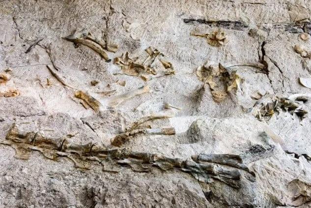 dinosaurios-fósiles en roca