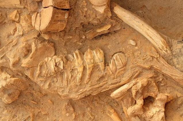 fósil encontrado