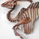 Por qué algunos huesos de dinosaurio duran tanto tiempo