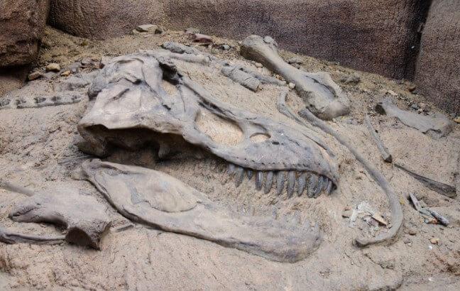 Métodos de preservación huesos dinosaurio