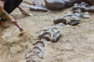 aspectos compra huesos dinosaurio