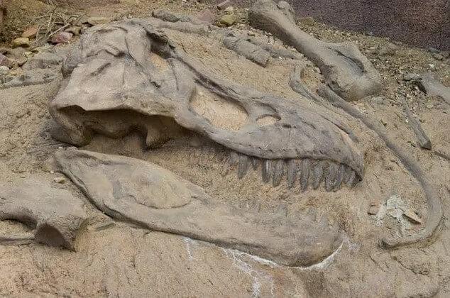 huesos fósiles de dinosaurio
