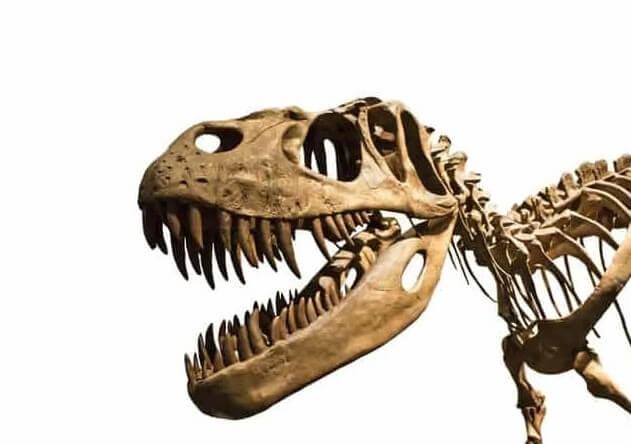 Dinosaurio-diente-en-la-mandíbula-de-T-Rex