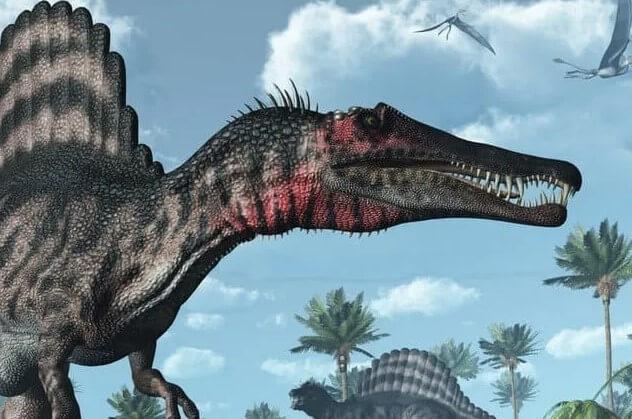 Muchos fósiles de spinosaurios han sido encontrados en las camas Kem-Kem en Marruecos